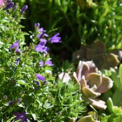 庭づくり/にわ/庭/フォロー大歓迎/ハンドメイド/DIY/...  こんにちは  今日は暑いですね 30度…