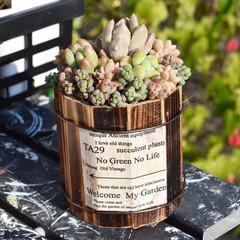 リメ缶ディスプレイ/リメ缶/寄せ植え/ペイントDIY/ペイント/たにく/... おはようございます  木材缶へ🌵  庭で…