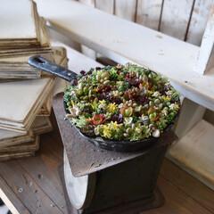 多肉植物/多肉/フォロー大歓迎/風景/インテリア/雑貨/... こんにちは☺️  断捨離中に出てきた小さ…