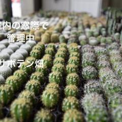 植物/植物のある暮らし/グリーンのある暮らし/多肉/おすすめアイテム/LIMIAスイーツ愛好会/... 暑い日が続いてますが、 植物も毎日暑そう…
