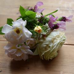 花/ガーデニング植物/ガーデニング/フォロー大歓迎/LIMIA手作りし隊/ハンドメイド/...  こんにちは  少し雨が小降りになったと…