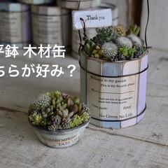 多肉/ワークショップ/ワークショップ講師/寄せ植え/サボテン/多肉植物/...  平鉢と木材缶  どちらが好き?  わた…