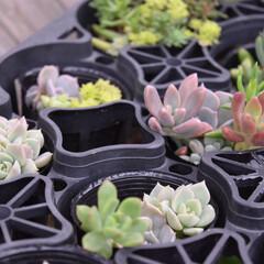 多肉植物/多肉寄せ植え/多肉/フォロー大歓迎/ハンドメイド/DIY  葉挿しっこ  小さい寄せ植えを作るとき…(1枚目)
