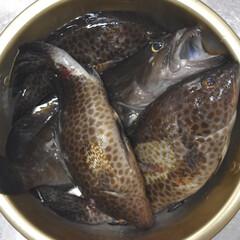節約生活/節約料理/節約術/家庭菜園/自給自足/釣り/...  今日は釣ってきたさかなが夕飯の おかず…