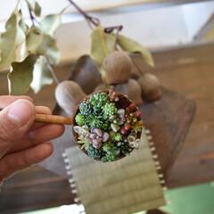 和/多肉植物/リメ缶/多肉/チマチマ/フォロー大歓迎/... こんにちは . . picは和とのコラボ…
