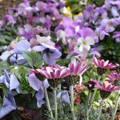 植物と暮らす/植物のある暮らし/ガーデン/庭づくり/庭/ガーデニング植物/... こんにちは🌞  寒いけど、お庭に出るのが…
