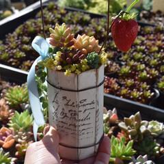 寄せ植え風/寄せ植え/多肉植物がある暮らし/多肉植物の寄せ植え/多肉植物寄せ植え/多肉植物/... . . 縦長缶 . 生クリームぽい質感で…