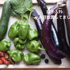 ガーデニング/庭/野菜/家庭菜園/ハンドメイド/住まい/...  こんにちは  忙しくて 気づいたら庭を…