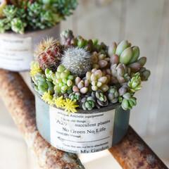 サボテン寄せ植え/サボテン/多肉/多肉植物がある暮らし/多肉植物のある暮らし/たにくしょくぶつ/... おはようございます  ネコ缶に🐈  ちょ…