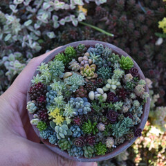 土間/裏庭/庭が好き/庭づくり/春のフォト投稿キャンペーン おはようございます😃  平鉢に。  庭が…