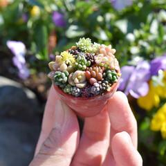 寄せ植え/小さな暮らし/ミニチュア雑貨/ミニチュア/多肉 こんにちは✨  昨日のカサゴは片栗粉をパ…