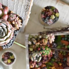 多肉植物/多肉/庭/庭づくり/植物のある暮らし/植物と暮らす/... こんにちは😃  あれこれ撮影してます☺️…