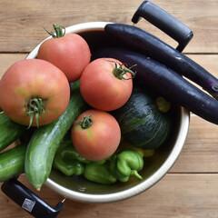 トマト/きゅうり/家庭菜園/犬派/LIMIA手作りし隊/ハンドメイド/...  こんにちは  家庭菜園沢山収穫出来てま…