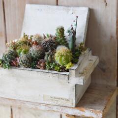 サボテンのある暮らし/サボテン寄せ植え/サボテン/リミアの冬暮らし/ダイソー/セリア/... . . 釣具屋さんで見つけた餌箱を ペイ…