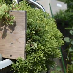 ガーデニング/庭づくり/サボテン/家庭菜園初心者/寄せ植え/セダム/...  こんにちは!  セダム✨  夏場も雨晒…