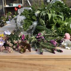 家庭栽培/家庭菜園/春のフォト投稿キャンペーン/風景/DIY/インテリア 今日は野菜とお花がたくさん採れました♪ …