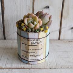 多肉植物/タニク/リメ缶/おすすめアイテム/フォロー大歓迎/LIMIA手作りし隊/...  こんにちは😃  . 木材缶に寄せ植え🥫…