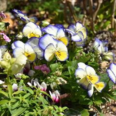 庭/庭づくり/花/お花/ガーデニング雑貨/ガーデニンググッズ/...  今日はお外もポカポカ 暖かいですね☀️…