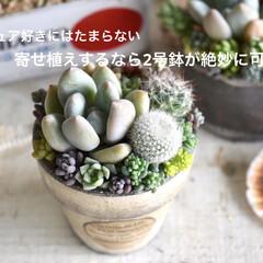 リメイク鉢/リメイク/多肉ちゃん/多肉寄せ植え/素焼き鉢/鉢/... 大きな寄せ植えと 小さな寄せ植え…  ど…