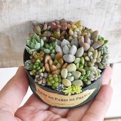 多肉植物がある暮らし/多肉ちゃん/多肉寄せ植え/多肉植物/多肉/100均/...  昔作ったネコ缶のリメ缶に 春に葉挿しか…