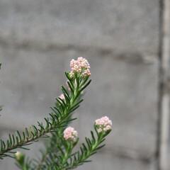 ガーデニングインテリア/ガーデニング植物/ガーデニング雑貨/ガーデニング/庭/庭づくり おはようございます🌞   ついに、こんに…