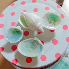 マリン雑貨/海/貝殻/100均/ダイソー/セリア/... 貝殻の磁石です