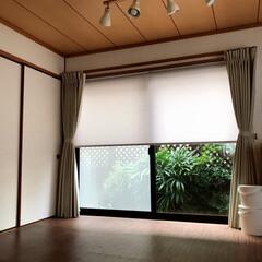 観葉植物/庭/ガーデニング/カーテン/ロールスクリーン/家具/... 雪見障子からヒントを得て、ロールスクリー…