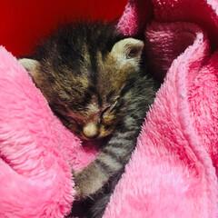スクエアボックス/ペット/猫/100均/ダイソー 新たに増えたうちのネコさん  小さすぎて…