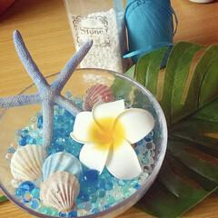 夏/インテリア/DIY/雑貨/100均/セリア/... 涼しげな雰囲気を出したいと思い貝やプルメ…
