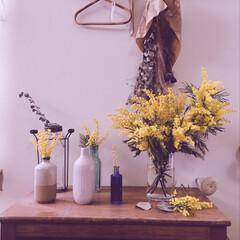植物のある暮らし/キャビネット/ディスプレイ/ドライフラワー/ミモザ/雑貨/... ミモザ飾りました〜 好きな雑貨や花瓶もい…