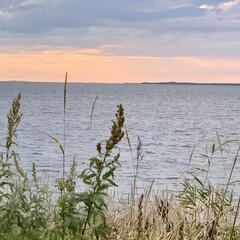 秋/湖/お出かけ/サンゴ草/サロマ湖/花/... 昨日は、日本で3番目に大きなサロマ湖を散…(8枚目)
