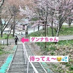 公園/桜/道東/ドライブ/お出かけ 土曜日、天気が良かったので🌸桜🌸を見られ…(6枚目)