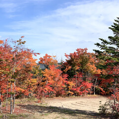 景色/紅葉/秋 🍁紅葉🍁  家のすぐ近くの景色です😊❣️…