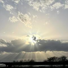 公園/桜/道東/ドライブ/お出かけ 土曜日、天気が良かったので🌸桜🌸を見られ…(8枚目)
