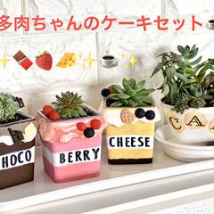 リメ鉢/多肉植物/雑貨/DIY/インテリア/ハンドメイド/... 🍰多肉ちゃんのケーキセット☕️  先日投…