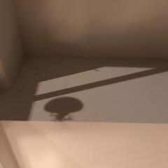インテリア/影/オブジェ/日常のふとしたこと/令和元年フォト投稿キャンペーン/雑貨/... ((((;゚Д゚)))))))  ‼︎ …(1枚目)