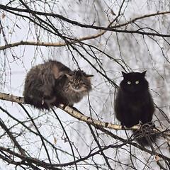 寒い/猫/四季/冬/日常のふとしたこと/おでかけ/... 寒い寒い冬がやってきた。 明日からまた一…(1枚目)
