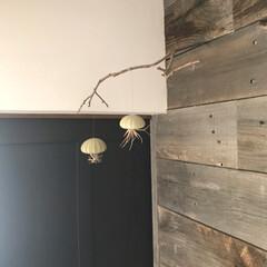 オブジェ/アート/木ノ実/おでかけ/DIY/雑貨/... 自然界からの贈り物  散歩途中で拾った木…
