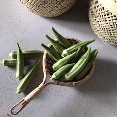 暮らし/お裾分け/オクラ/採れたて野菜 ここのところは高いと言われているお野菜 …