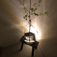 間接照明/好きな場所/センサーライト/玄関/暮らし/住まい 家の中でも好きな場所が玄関  帰りが遅く…
