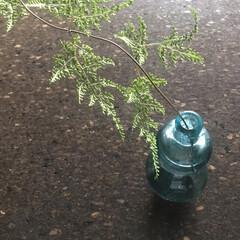 古道具/梅雨明け/瓢箪/グリーン/インテリア/雑貨/... 駐車場でフェンスの隙間から'こんにちは'…