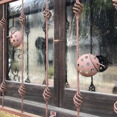 アイアン/格子/京都/GW/おでかけ/風景 ふと現れたてんとう虫格子 面白くて可愛いい