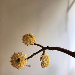 黄色/お花/癒し/暮らし きみの名は? わからずとも黄色いお花… …