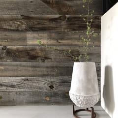 生活/花器/コンクリート/枝もの/グリーン/雑貨/... お部屋にグリーンがある暮らし…  生花も…