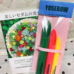 美しいセダムの寄せ植え/YOSEBOW/おうち時間を楽しく/多肉植物寄せ植え YOSEBOWをゲットしました〜🤣  タ…