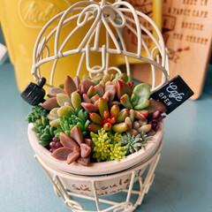 リメイク鉢/おうち時間を楽しく/多肉植物のある暮らし 寄せ植えを作って、先日購入した鳥かごに入…