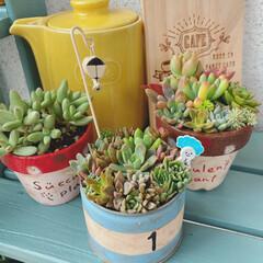 おうち時間を楽しく/多肉植物/リメイク鉢 4連休も相変わらずのおひとり様生活😂 ず…