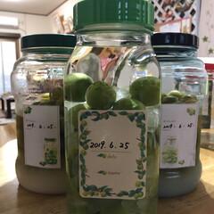 梅サワー/手作り梅酒/フォロー大歓迎 やっと梅が手に入り、今年も無事に漬けるこ…