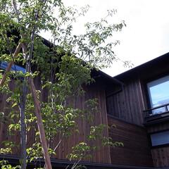 木の家/家づくり/住まい/暮らし/不動産・住宅/建築/... 伏見の家|中山建築設計事務所