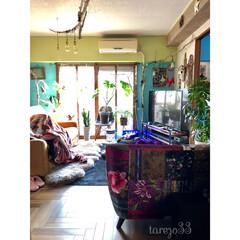 黄緑の壁/水色の壁/流木/ハンドメイド/グリーンある暮らし/窓枠DIY/... ソファ配置換え after  ダイニング…